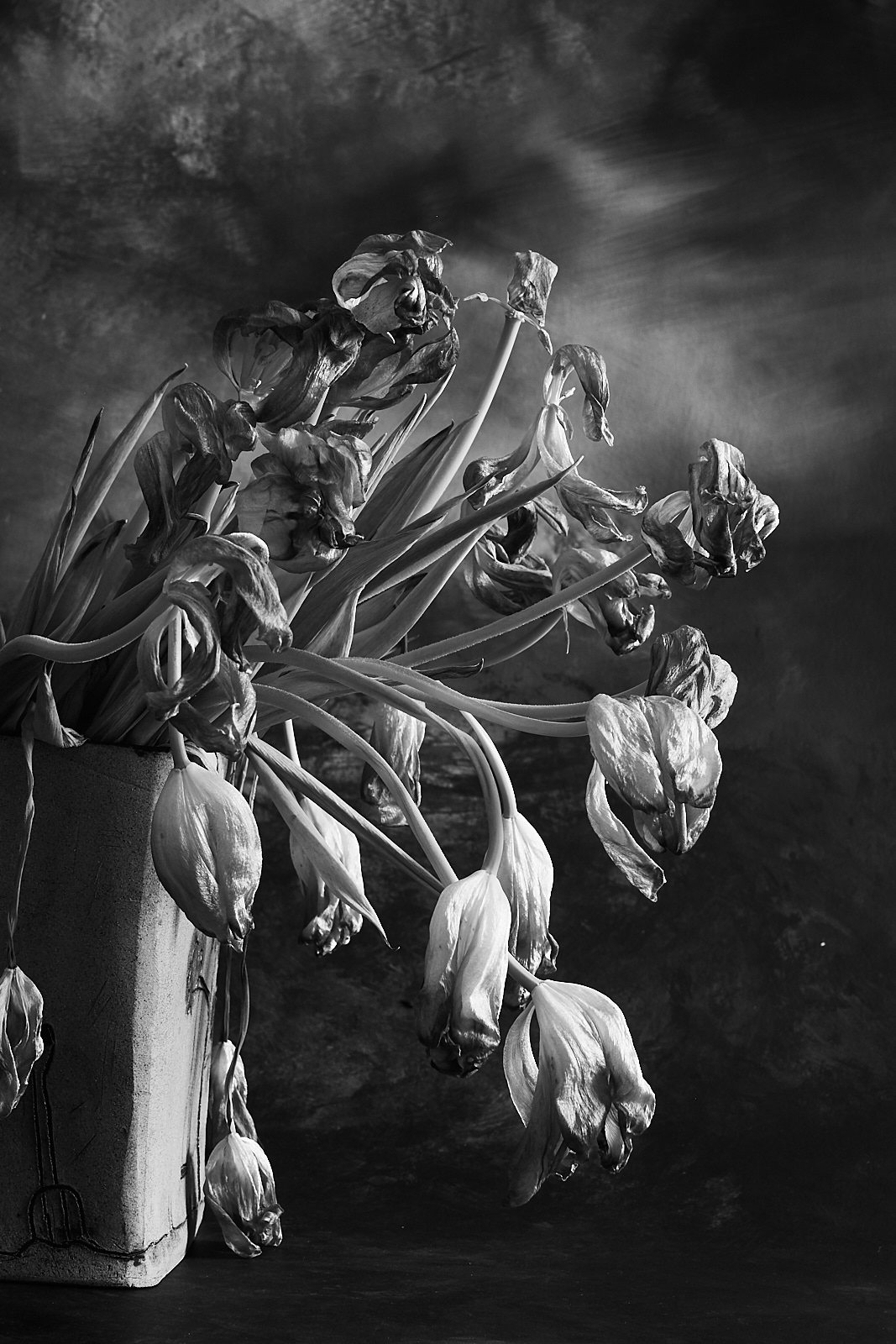 Ageing Tulips in Square Vase0349-b&w-portrait-6