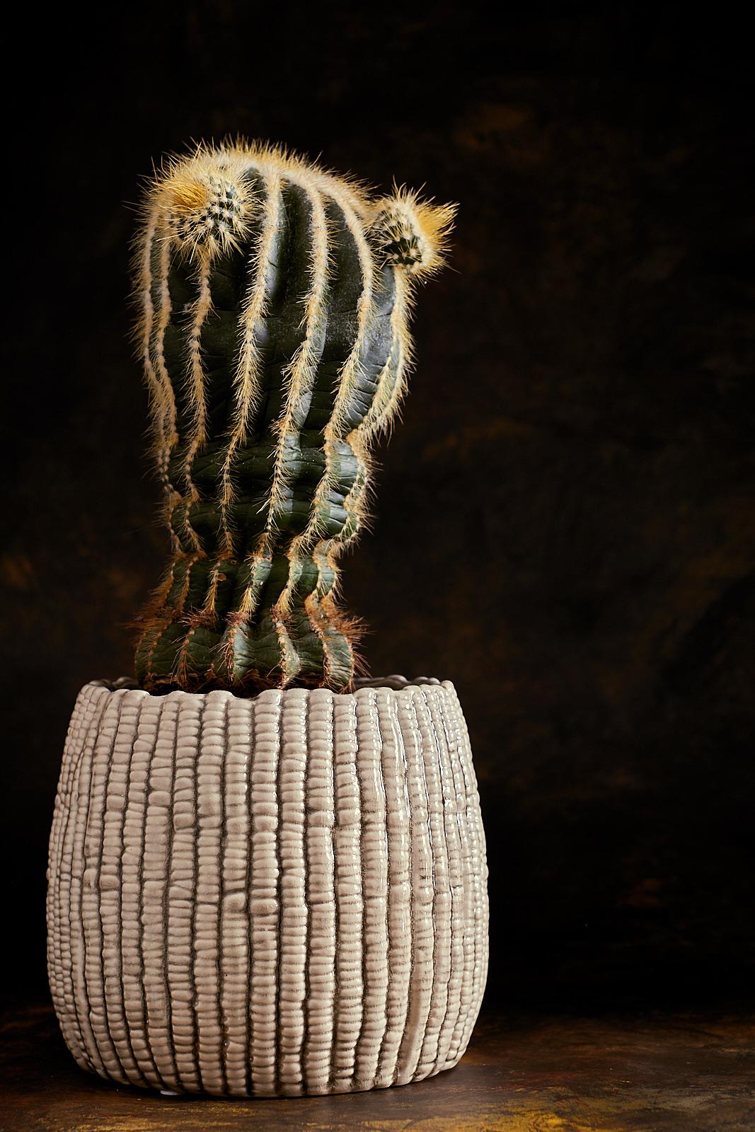 Cactus0257-1600w